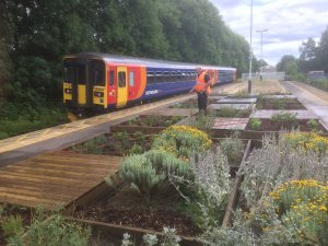 Community planting day at Duffield Station: Friday 27 April